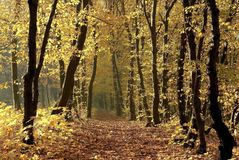 Autumn forest path at sunrise Royalty Free Stock Photography
