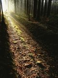Autumn forest path at sunset Royalty Free Stock Photo