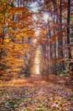 Autumn on forest path VI Royalty Free Stock Image