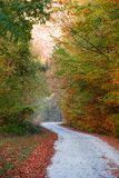Autumn forest path. Vibrant colors of autumn have paint this picturesque forest scenery stock photos