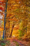 Autumn on forest path VII Stock Images