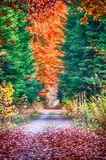 Autumn on forest path VIII Stock Images