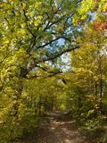 Autumn Forest Path Royalty Free Stock Photos