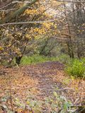 Autumn forest path walkway through dark way yellow leaves ground Stock Photography