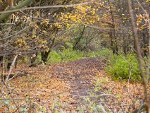 Autumn forest path walkway through dark way yellow leaves ground Royalty Free Stock Photography
