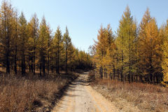 Autumn forest. A path through which royalty free stock photo