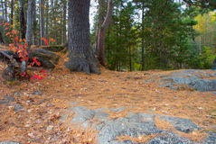 Autumn forest path, Wisconsin, USA Royalty Free Stock Photos