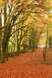 Autumn forest pathway. Stock Photos