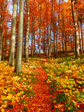 Autumn forest and pathway stock image