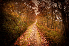 Autumn Forest Pathway scuro Immagine Stock