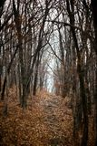 Autumn forest without people. stock photo