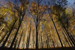 Autumn forest. Photo of a colourful autumn forest shot from below Stock Image