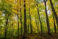 Autumn forest in Pictured Rocks, Munising, MI, USA. With colorful trees Royalty Free Stock Photo