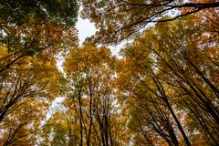 Autumn forest in Pictured Rocks, Munising, USA. View of treetops. Autumn forest in Pictured Rocks, Munising, MI, USA.  View of colorful treetops Stock Photos
