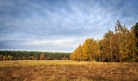 Autumn forest. In Poland. Beautiful colors of autmn Royalty Free Stock Photo