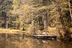 Autumn at forest pond Royalty Free Stock Image