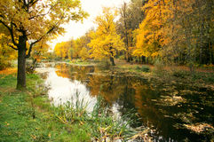 Autumn forest and the pond. Autumn forest with bright yellow leaves and the pond royalty free stock photography