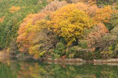 Autumn forest and pond Stock Photography