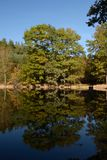 Prague Autumn forest on the pond Royalty Free Stock Photography