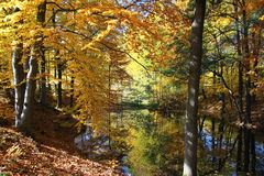 Autumn forest pond Royalty Free Stock Images