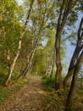 Autumn forest. With public footpath UK Royalty Free Stock Photography