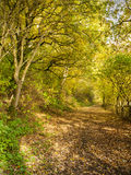 Autumn forest. With public footpath UK Stock Photography