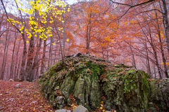 Autumn forest in Pyrenees Valle de Ordesa Huesca Spain Royalty Free Stock Photo