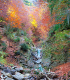 Autumn forest in Pyrenees Valle de Ordesa Huesca Spain Royalty Free Stock Images