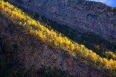 Autumn forest in Pyrenees Valle de Ordesa Huesca Spain Royalty Free Stock Photos