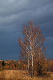 Autumn forest after rain Royalty Free Stock Photography