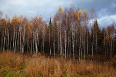 Autumn forest after rain Stock Photo