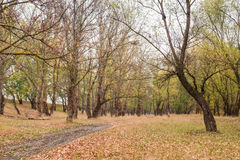 Autumn forest after rain Royalty Free Stock Photo