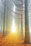 Autumn forest in a rays of sun. Sparkle light in the end of tunnel stock image