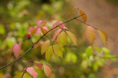 Autumn in the forest. Red leaves on the tree, daytime. The beginning of aytumn in the forest. Yellow leaves and some grass. Daytime stock photography