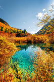 Autumn forest reflected in amazing pond with azure water Royalty Free Stock Images