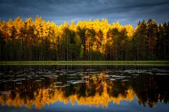 Autumn forest reflected in lake