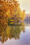 Autumn forest reflected on lake Stock Image
