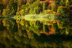 Autumn forest reflected in lake Royalty Free Stock Photos