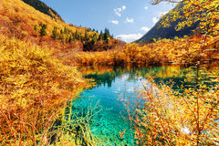 Autumn forest reflected in scenic pond with azure crystal water Royalty Free Stock Photo