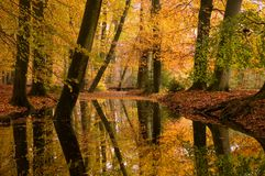 Autumn forest reflected in a stream stock photos