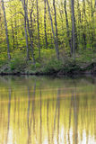Autumn forest reflected in the water Royalty Free Stock Image