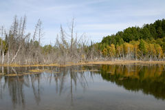 Autumn forest reflected in the water Royalty Free Stock Photo