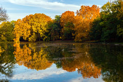 Autumn forest reflecting. In the lake Royalty Free Stock Photo