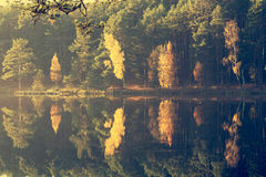 Autumn forest reflecting on lake Royalty Free Stock Image