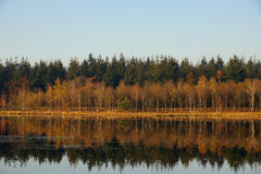 Autumn forest reflection Royalty Free Stock Image