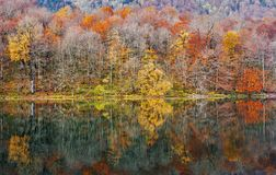 Autumn forest with reflection on Biogradsko lake. Autumn forest with beautiful color reflection on Biogradsko lake in Montenegro royalty free stock images