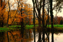 Autumn forest and reflection in creek Royalty Free Stock Photo