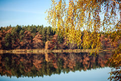Autumn forest reflection in lake, shallow depth of field Royalty Free Stock Images