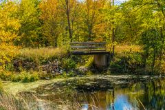 Autumn forest reflection landscape. Forest, pond, & foot bridge royalty free stock photos