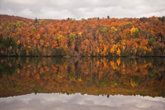 Autumn forest reflection Stock Photo